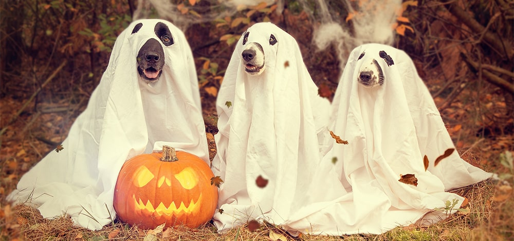 Dogs wearing Halloween Masks in October